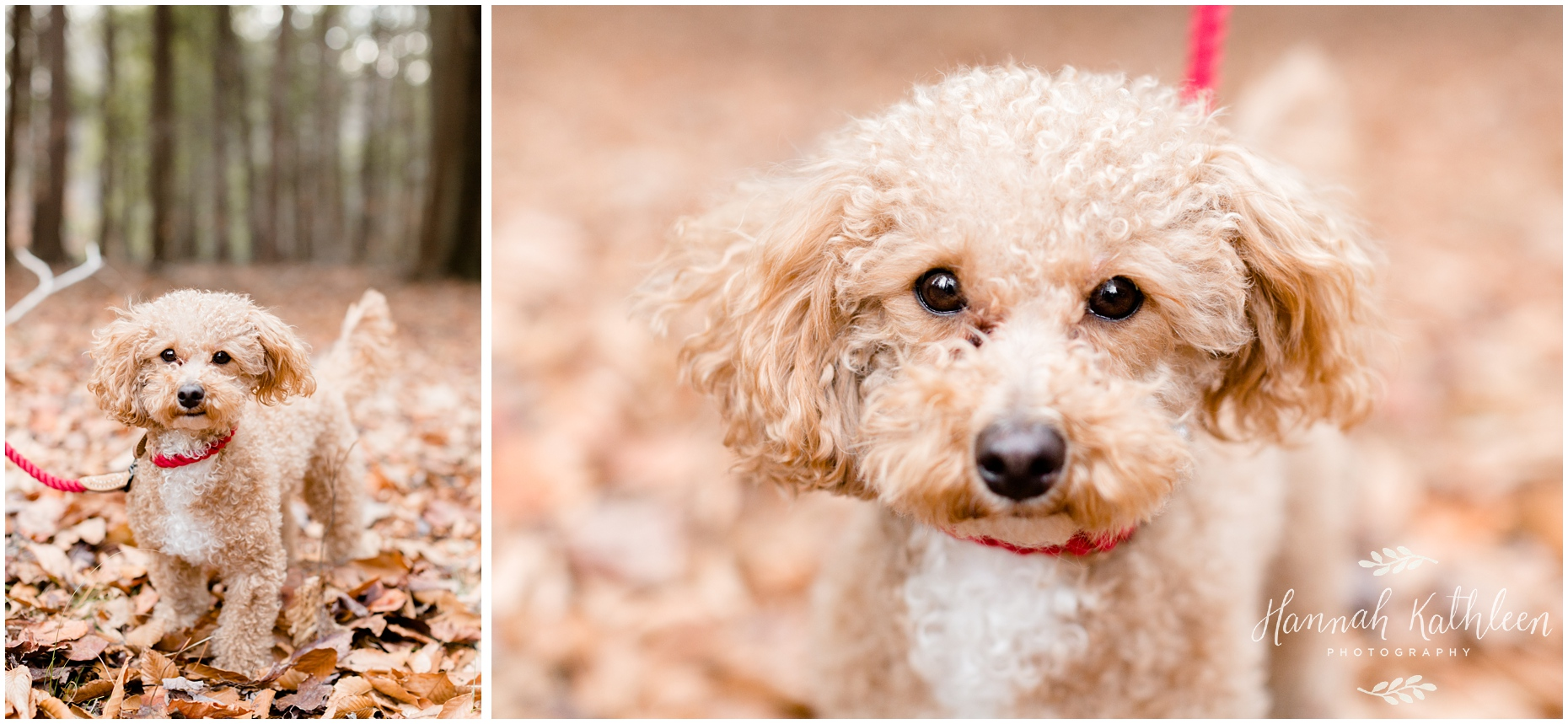 chestnut_ridge_park_family_photography_puppy_fall_hamburg_orchard_park